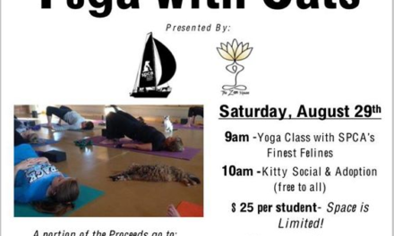 Yoga with Cats Fundraiser for the SPCA this weekend at The Zen House